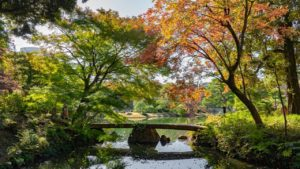 六義園に紅葉を撮影しに行ってきました